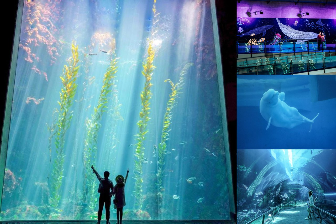圖1&4/IG@beckhamhong66授權、圖2&3/屏東國立海洋生物博物館臉書專頁